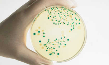 E. coli vs. Shiga toxin-producing E. coli - what's the difference and what's the problem?