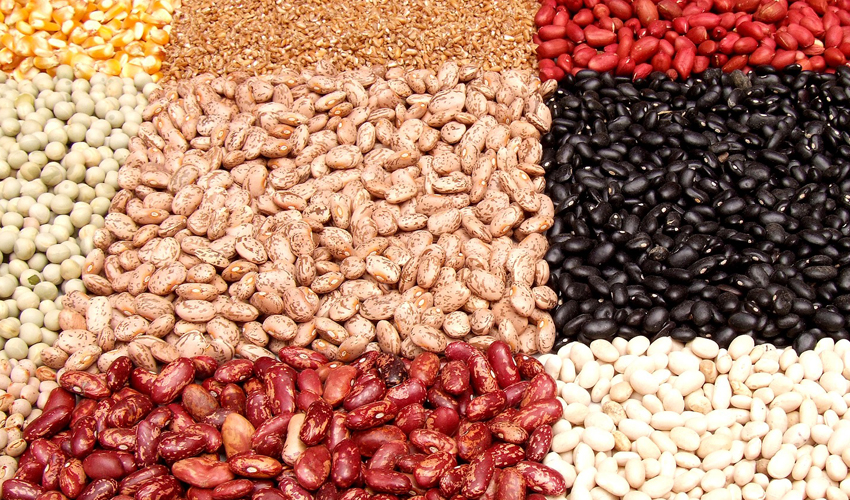 Potential of plant proteins for ingredient and product development